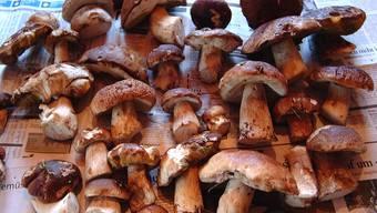 Selbst erfahrene Pilzsammler sollten heuer ihre Ausbeute kontrollieren lassen. (Symbolbild)