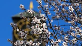 Der Frühling lässt die Herzen höher schlagen