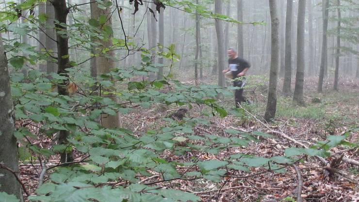Die Baselbieter Regierung will für ein Naturschutzprogramm im Wald vier Millionen Franken ausgeben.