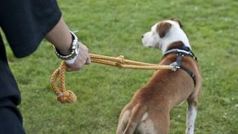 Petitionen sollten nicht unterschätzt werden: Diejenige gegen den Leinenzwang für Hunde während der Brut- und Setzzeit in den Langen Erlen war erfolgreich. (Symbolbild)