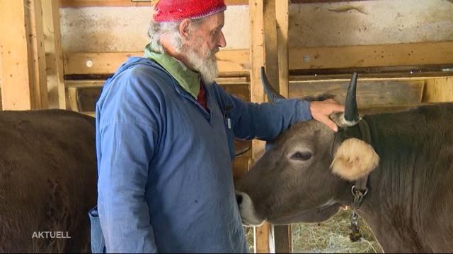 Das Volk will Nutztiere weiterhin ohne Hörner