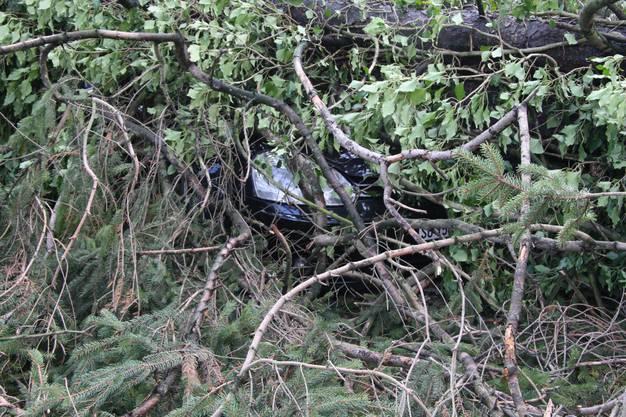 Wo ist das Auto wo – auf einem Parkplatz an der Nordringstrasse ist ein Auto unter einem Baum begraben.