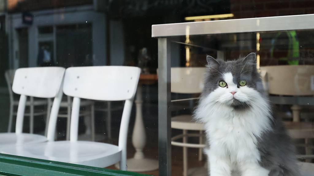 Hunderte Katzen in Grossbritannien an seltener Krankheit verendet