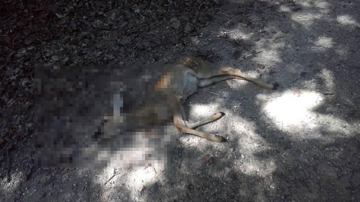 Dieses Reh wurde am Donnerstag tot in Suhr aufgefunden.