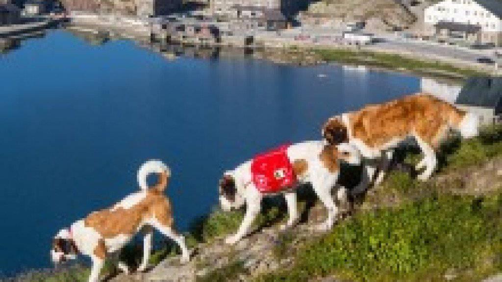 Der Alpabzug der Bernhardiner-Hunde ist eine Touristen-Attraktion geworden (Bild: Fondation Barry)