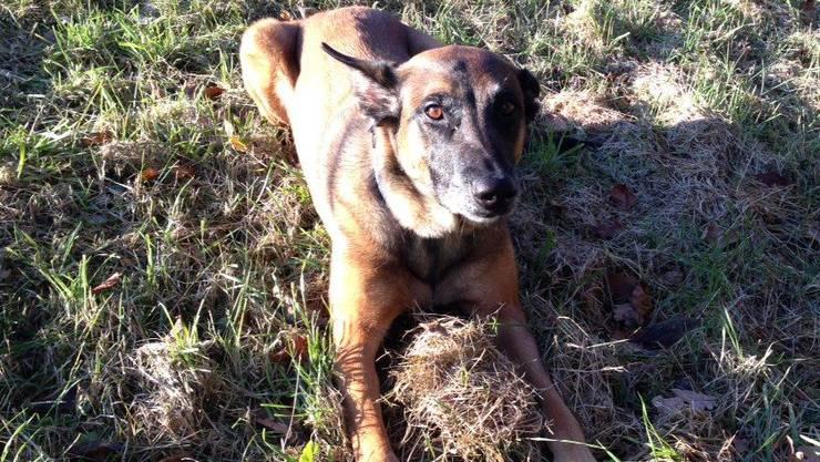 Für den Polizeihund gabs nach der erfolgreichen Suche sicherlich ein «Leckerli».