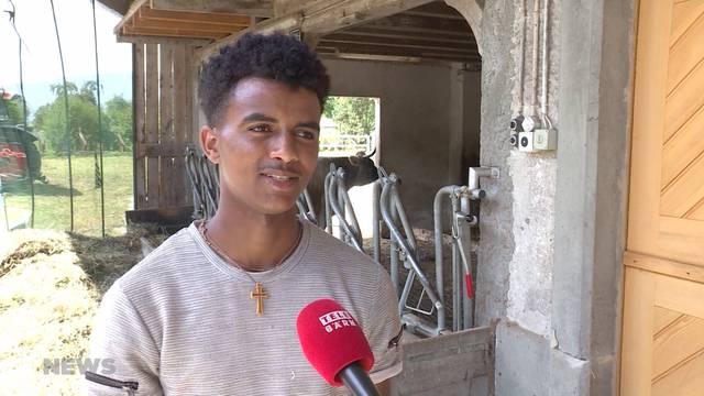 Flüchtlinge machen Vorlehre auf dem Bauernhof