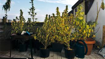 Statt Samen für die Hanfpflanzen auf seinem Balkon hat ein junger Basler in diesem Jahr einen Brief von der Staatsanwaltschaft erhalten.