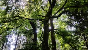 funkelnder Wald...
