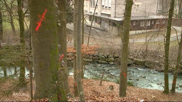 Baumfrevler markiert 40 Bäume in Dietikon