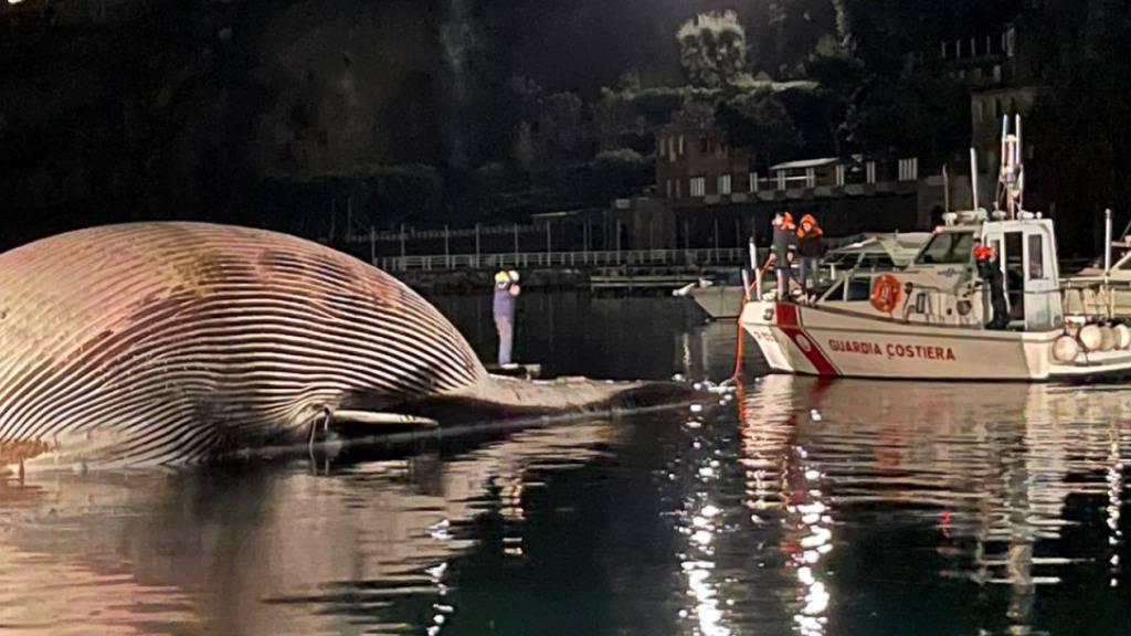 Riesiger toter Wal im Mittelmeer geborgen - Sorge um jüngeres Tier