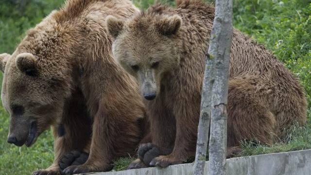 Die Bären sollen mittelfristig mehr Platz kriegen in ihrem Park