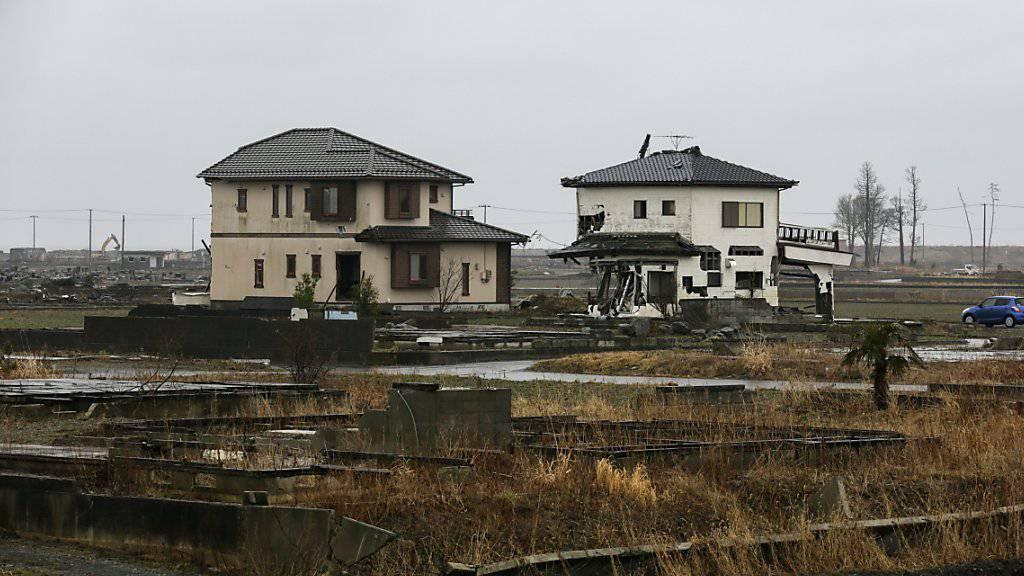 Bären, Wildschweine und Marderhunde vermehren sich rasend schnell in den evakuierten Gebieten um das havarierte Atomkraftwerk Fukushima, das 2011 von einem Tsunami getroffen wurde. (Archivbild)