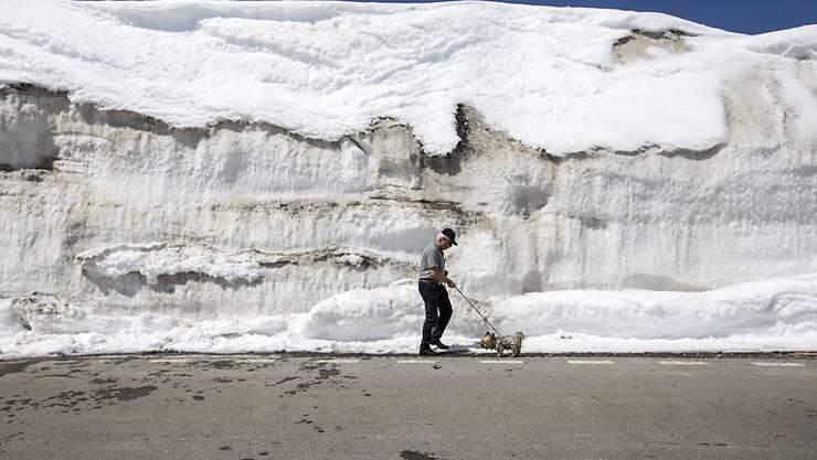Kleiner Hund vor grosser Schneewand zur Eröffnung der Oberalppass-Verbindung.