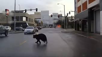 Der Bär ging ab durch die Mitte, den Streifenwagen immer im Schlepptau – dieses witzige Video veröffentlichte die Polizei nach der ungewöhnlichen Verfolgungsjagd.