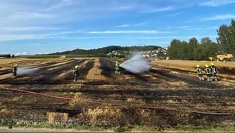 Am frühen Samstagabend löst ein Weizenfeldbrand in Sarmenstorf einen Grosseinsatz aus. Über 1500 m² Getreidefeld sind dabei verbrannt. Dank der Feuerwehr und dem aufmerksamen Landwirt, konnte das Feuer glimpflich gelöscht werden.