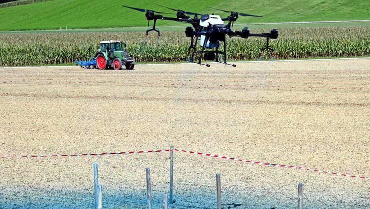 Drohnen können Pflanzenschutzmittel mit weniger Streuverlusten ausbringen: Durch den Abwind der Rotoren spritzen die Tropfen direkt auf die Pflanzen.