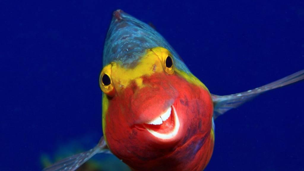 Wenn die Natur lacht, lachen wir mit