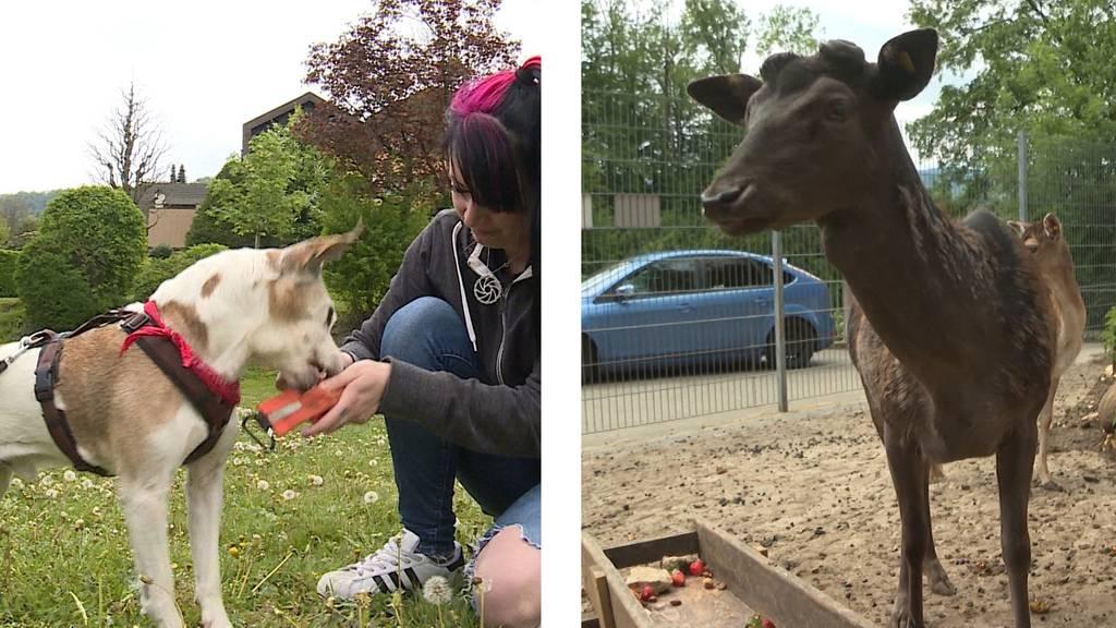 Happy End / Tierischer Kopfschmuck