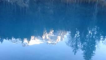 In der dem Blausee im Berner Oberland angegliederten Fischzucht sind in den letzten Monaten Zehntausende Tiere gestorben.