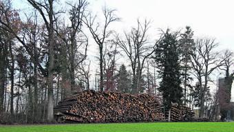 Durch seine grosse Entfernung zum nächsten Fichtenwald eignet sich das Schlatt-Gebiet als Lagerplatz.