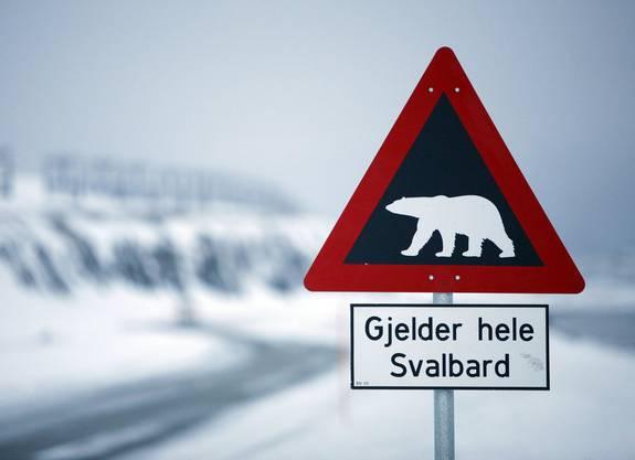 Achtung, Eisbären! Eine eigene Schusswaffe ist auf Spitzbergen fast Pflicht.