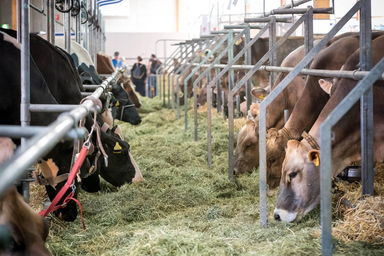 Typische Impression der Schweizer Messe für Landwirtschaft und Ernährung. (© Michael Huwiler)