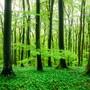 Es grünt so grün: Leserfotos aus dem Aargau 1. Mai 2019