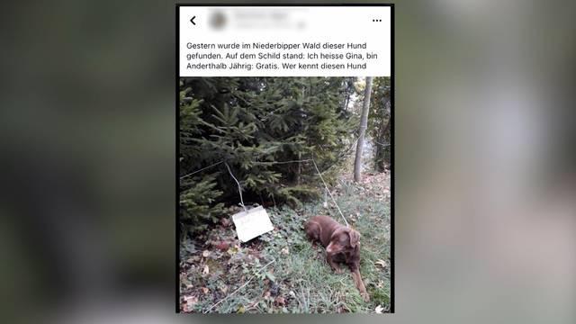 Ausgesetzter Hund in Niederbipp war böser Scherz