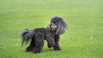 Hunde und Katzen tragen oft multiresistente Bakterien mit sich, die auch über Tierfutter mit Rohfleisch übertragen werden können.