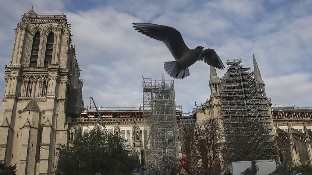 ARCHIV - Eine Möwe fliegt an der Kathedrale Notre-Dame vorbei. Foto: Michel Euler/AP/dpa