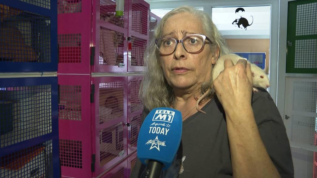 Aussergewöhnliche Haustiere: Die Freiämterin Judith Bernegger lebt mit 25 Ratten