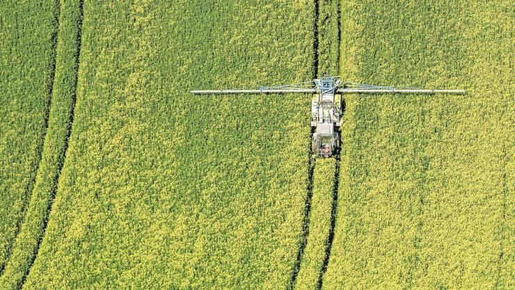 Ein Rapsfeld wird mit Pestiziden besprüht.