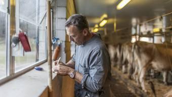 Ein Tierarzt kümmert sich um die Kuehe eines Milchbauern.