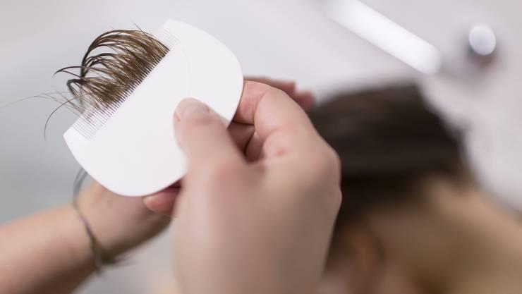 Läuse krabbeln im direkten Kopfkontakt von einem Haarschopf zum anderen. Sie sind ungefährlich, jedoch juckt es und kann bei zu häufigem Kratzen zu Entzündungen der Kopfhaut führen. Mit einem Lauskamm kann der Befall überprüft werden, um dann mit einem Kopflausmittel gegenzuwirken.