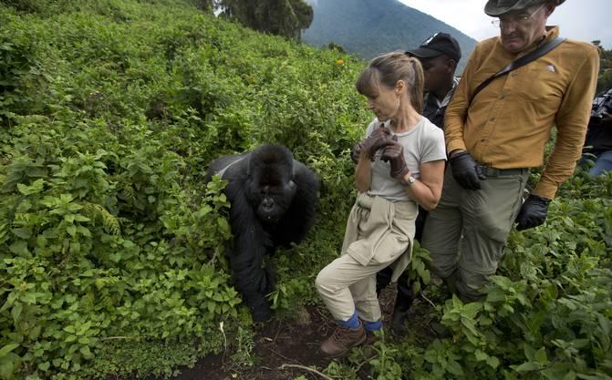 Besuch trifft ein! Pro Tag dürfen die Affen jeweils nur eine Stunde lang von einer kleinen Touristengruppe aufgesucht werden.
