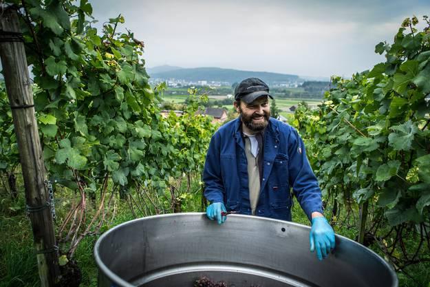 «Trotz des Schädlingsbefalls sollte es dieses Jahr einen guten Wein geben. Er wird heuer einfach eher fruchtig-spritzig ausfallen», sagt Roland Steinmann Kellermeister im Kloster Fahr.