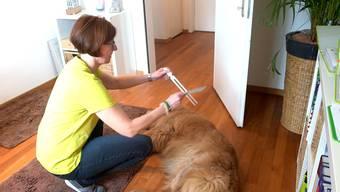 Claudia Cazemier zeigt Redaktor Dominic Kobelt, wie der Muskeltest funktioniert, und mithilfe von ihrem Golden Retriever Beni, wie sie Hunde behandelt.