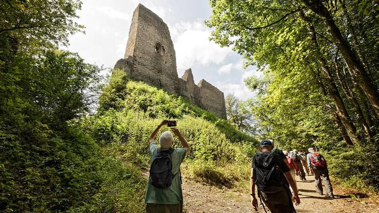 Die Ruine Schenkenberg: die grösste Burgruine der Schweiz.