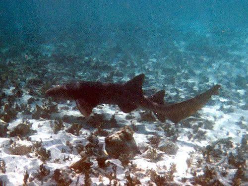 Und noch einmal ein Hai
