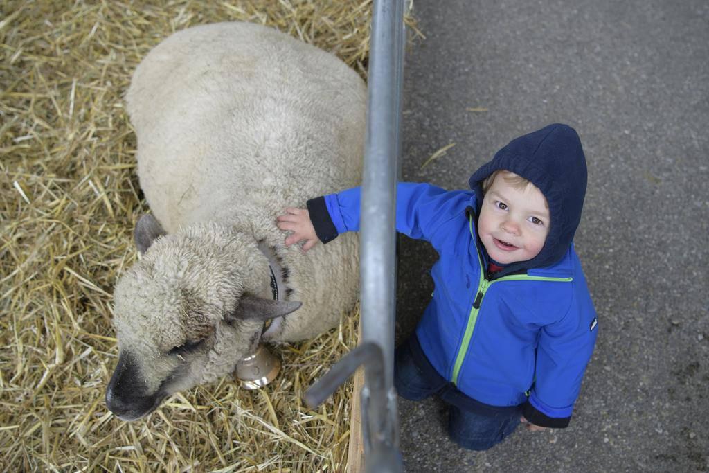 Darauf hat dieser Junge gewartet: An der Olma ein Schaf zu streicheln.