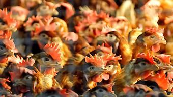 Die Fair-Food-Initiative will unter anderem verhindern, dass Produkte aus Massentierhaltung in die Schweiz importiert werden. Im Nationalrat hatte das Volksbegehren einen schweren Stand. (Symbolbild)