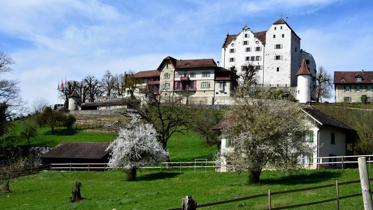 Schloss Wildegg im Frühlingslicht