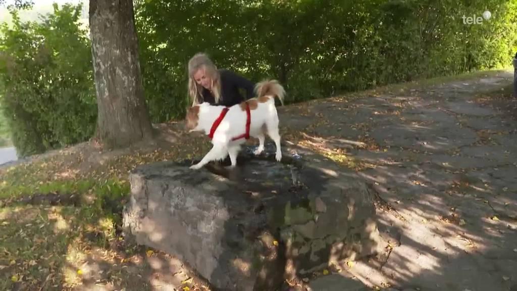 Tierische Pediküre / Königspinguin-Nachwuchs