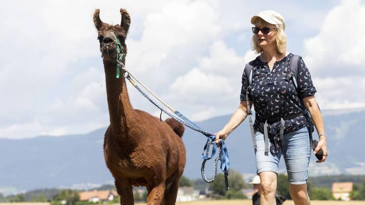 Wandern mit Lamas, das ist im Bucheggberg möglich.