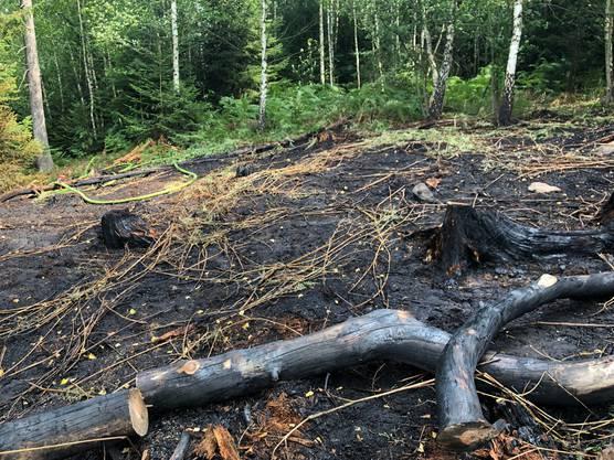 5000 Quadratmeter Wald gingen in Flammen auf.