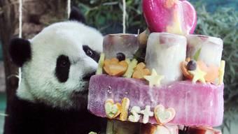 Panda Juan Zai feiert seinen ersten Geburtstag