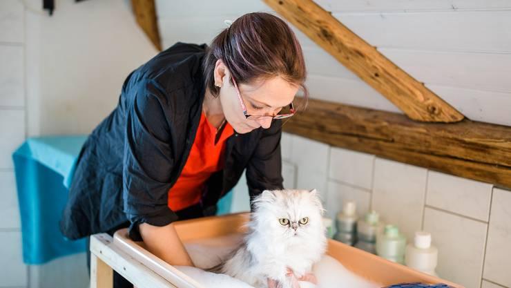 In Helenas Salon «Katzenbaden» ist der Name Programm.