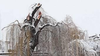 Wie im Märchen: Schloss Lenzburg wirkt, als gehöre es in den Kult-Film «Drei Nüsse für Aschenbrödel». Ammerswil abgeschnitten: Ammann Marianne Horner nimmt's gelassen. Bis spät nachts waren schneebegeisterte Aarauer in der Altstadt zugange. Extrem-Busfahren in Aarau. Die Trauerweide verlor ihre Krone.