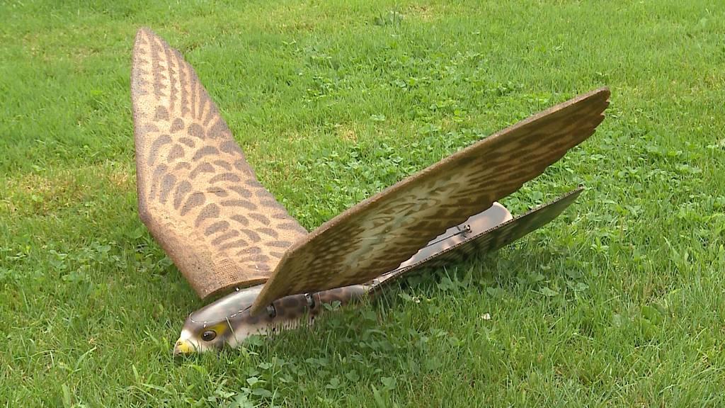 Drohnen-Falke gegen Krähenplage